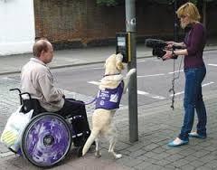 assistance dog 2