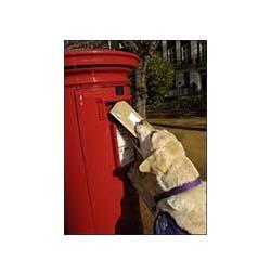 assistance dog 250-253